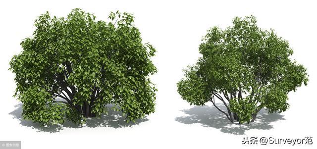 什么是喬木,什么是灌木?一起來看看。