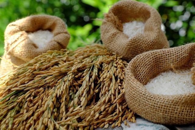 夏天大米容易生米虫,教你1个小妙招,米袋子里1个米虫也长不出来