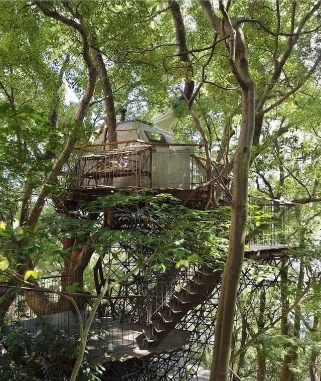 天体树屋、玻璃树屋……你见过几个?