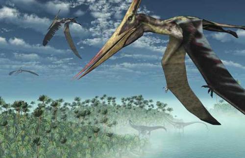 为什么天上很少有比人体型更大的生物?