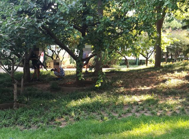 """骑着滑板冲坡,绿地组团""""枪战""""……孩子们公园里撒野埋隐患"""
