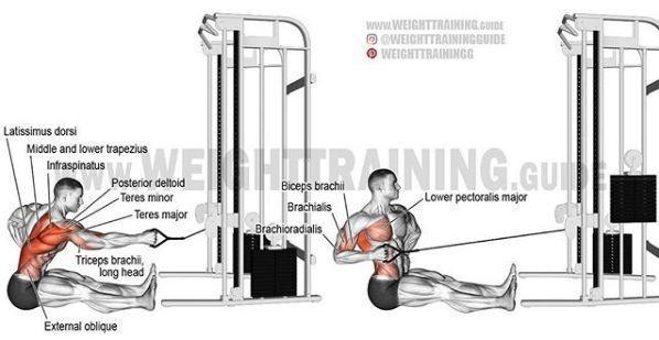 史上最全肌肉训练图解,告别瞎练从此健身不求人!