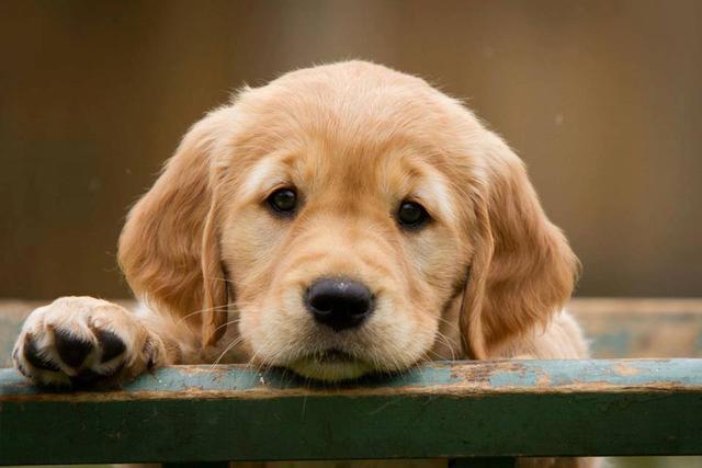 狗狗有不良行为该怪谁?不一定是主人没训好,皮肤病也能引发问题
