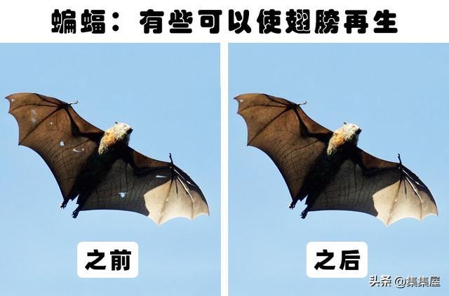 令人类羡慕,拥有再生能力的12种动物秋津真白  西安新闻