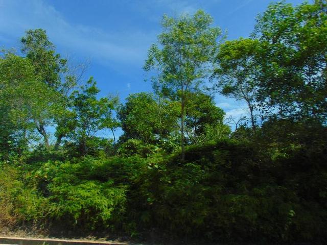 森林中的城市---斯里巴加湾,路不宽很干净人少车少(文莱游15)