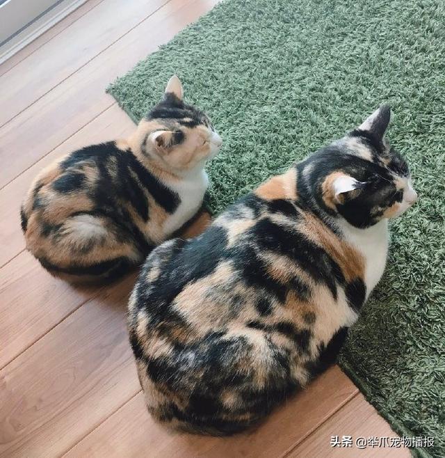 有一种猫咪是关不住的,请欣赏知名电影海报——喵申克的救赎-第5张图片-深圳宠物猫咪领养送养中心