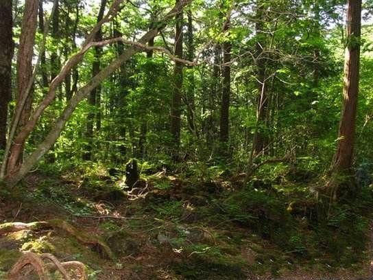 世界上最恐怖的森林:日本青木原森林-第1张图片-IT新视野
