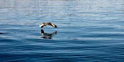 与水有关的古诗词,太美了