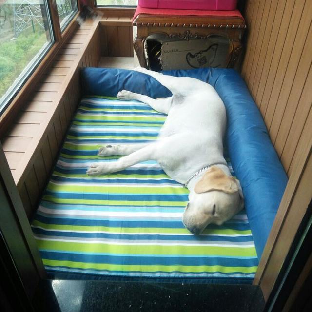别让狗狗躺地面了,否则容易得肘关节囊肿,严重的话需要手术治疗