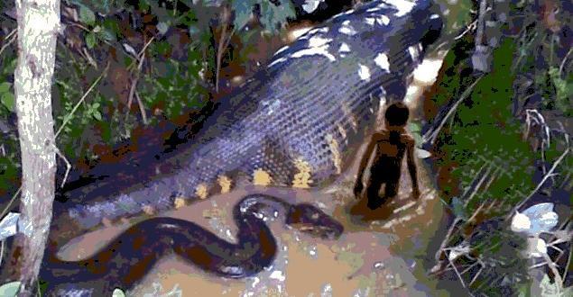 世界上最大的蛇:亚马逊森蚺-第3张图片-IT新视野