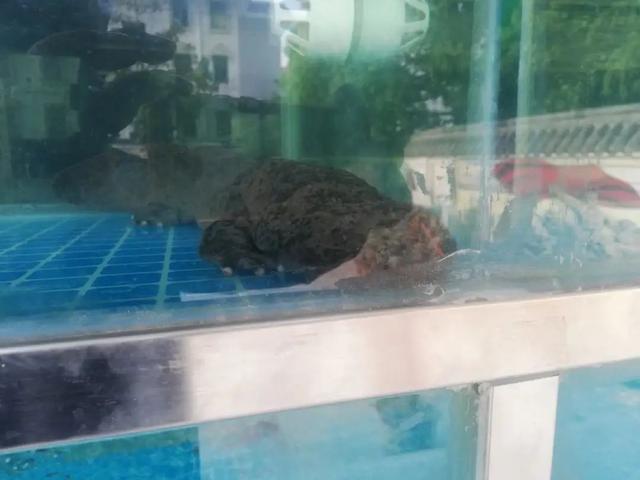 """【公益诉讼】非法交易""""娃娃鱼""""!检察建议助推野生动物保护"""
