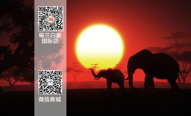 洁净安详—锡兰白象前世与今生的缘