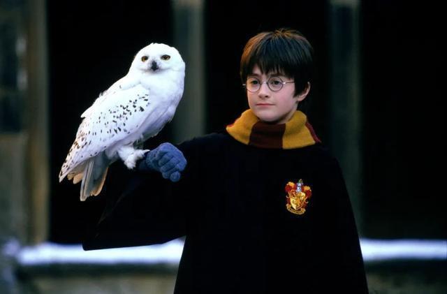 《哈利波特》四十岁生日,当时的少年成了怎样的模样?