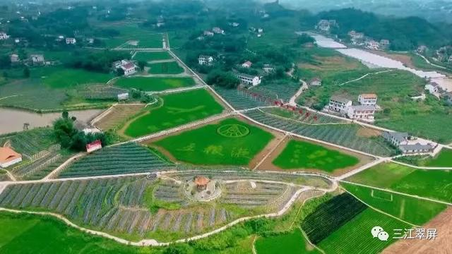 四川省乡村振兴示范县(市、区)案例分析六:宜宾市翠屏区