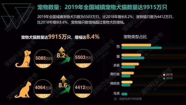 中国宠物数量超1亿只,但很多人却忽略了这件事……