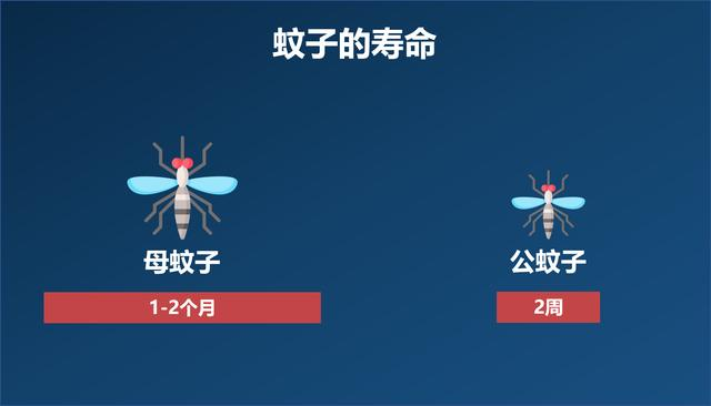 交配后才吸血?蚊子如何在短暂的一生中,让我们对其深恶痛绝?