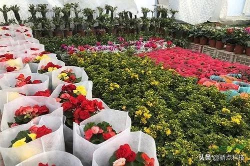 为什么鲜花行业要制作小程序?将会给整个鲜花行业带来变革