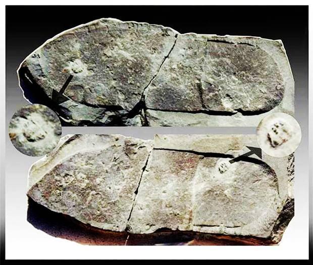 3亿年前的脚印之谜,真假难辨,各有各的说法