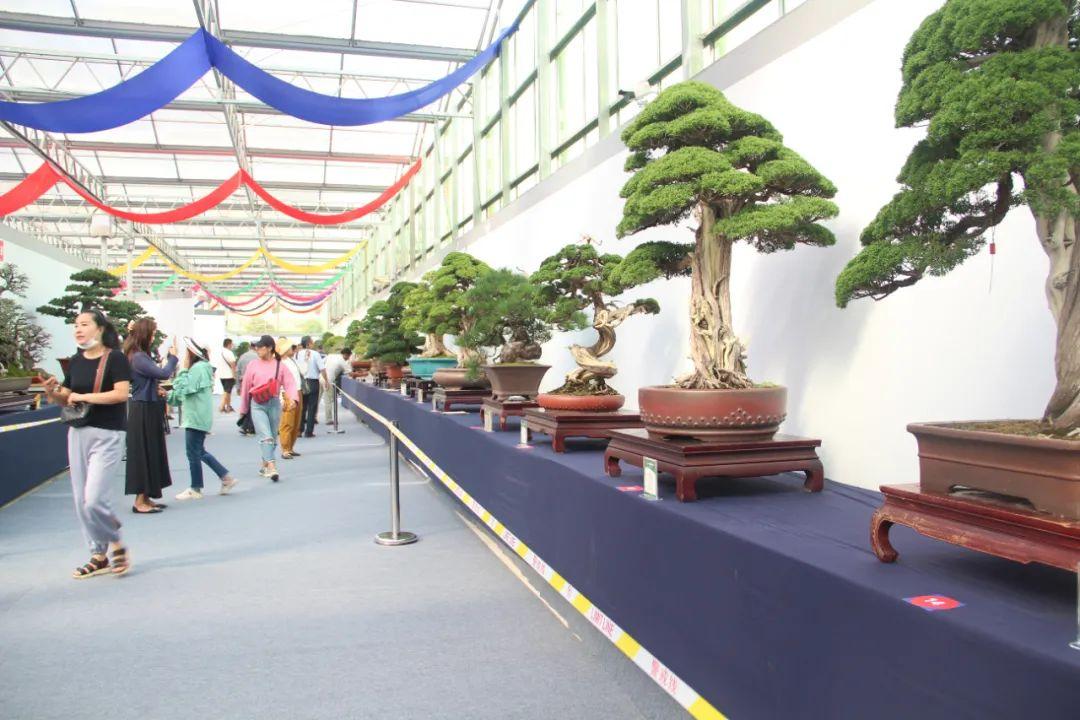 定了!2021第九届沭阳花木节将于9月底举办