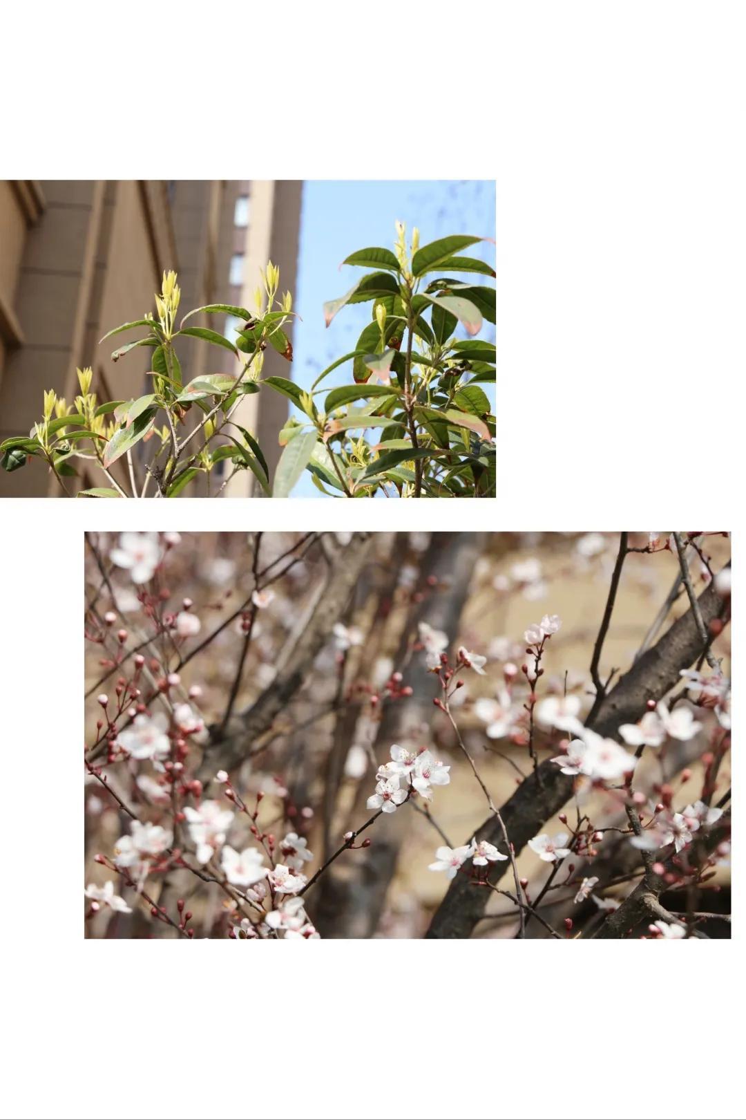 五龙新城汇爱幼稚园丨春暖花开,我们都在