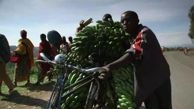 """非洲黑哥爱用""""二八大杠""""运香蕉,时速60公里都不捏刹车..."""