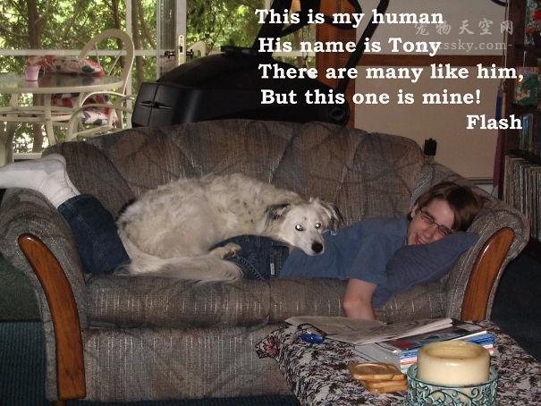 網友分享自家狗狗的搞笑行為,你家的狗狗有嗎?