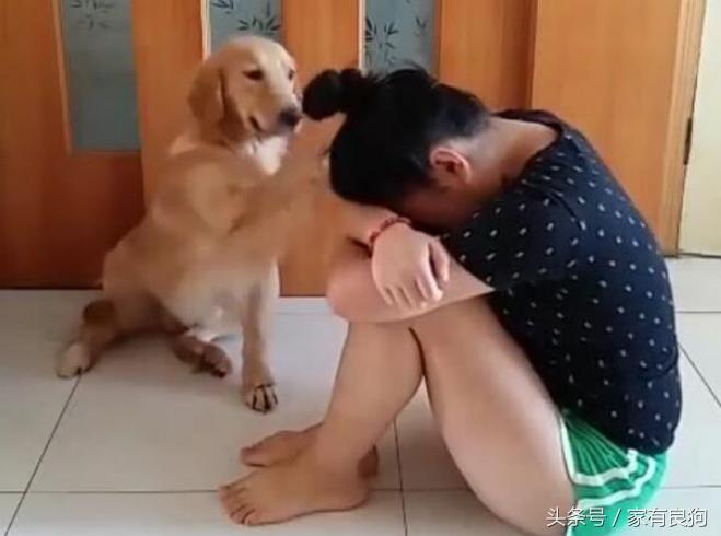 盤點:寵物狗與主人的搞笑瞬間,讓人捧腹大笑!