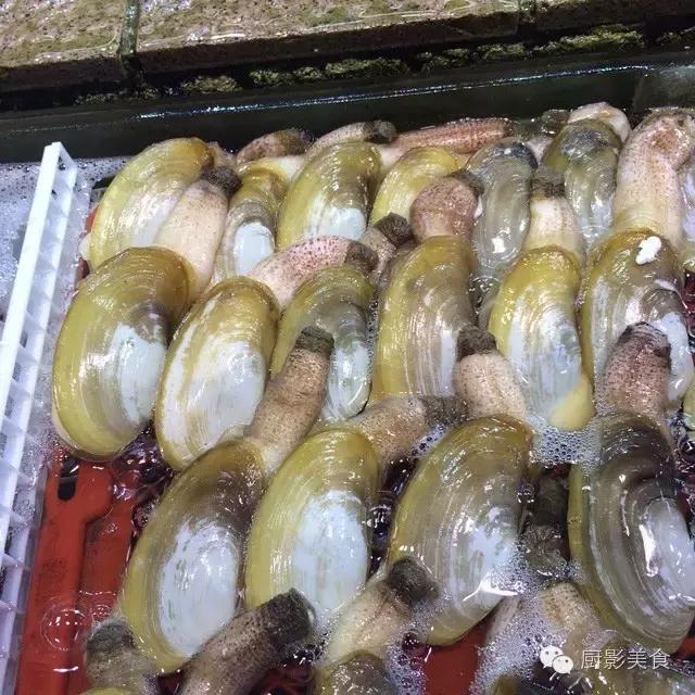 香港西贡海鲜市场,珍稀野生鱼类宝典! 食材宝典 第14张