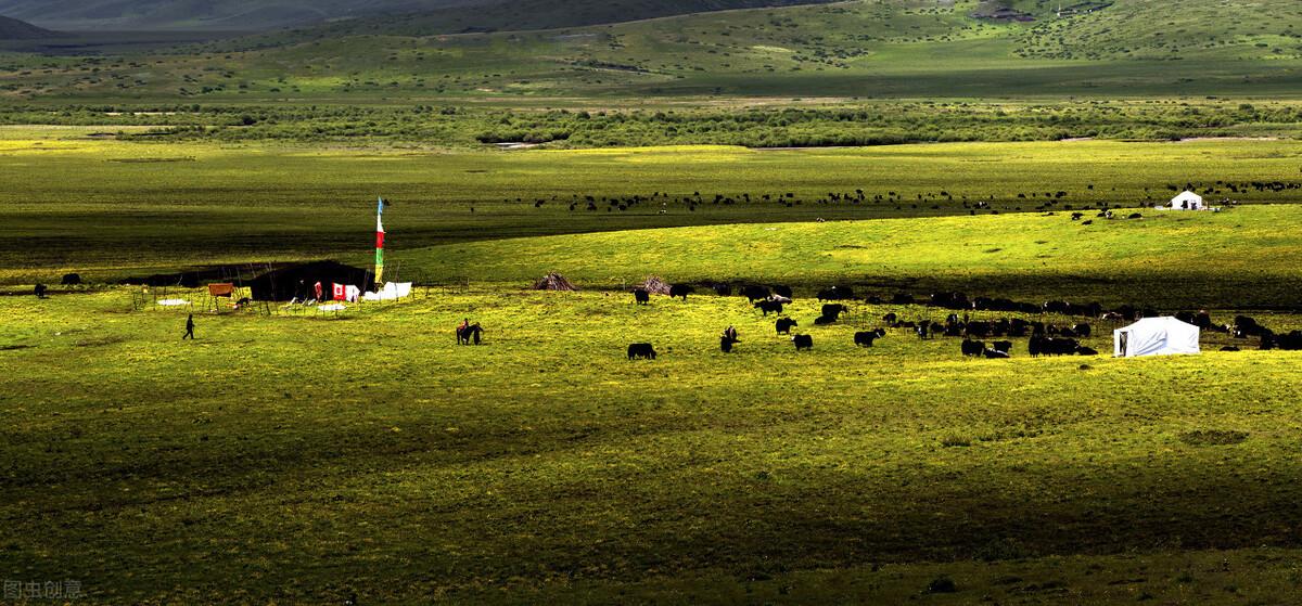 秋日的绝色甘南,悠闲的老牛和欢愉的马儿在向你招手