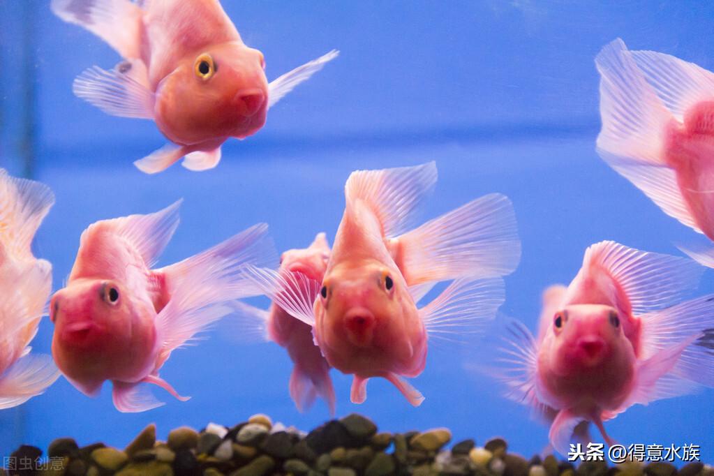 可爱的鹦鹉鱼