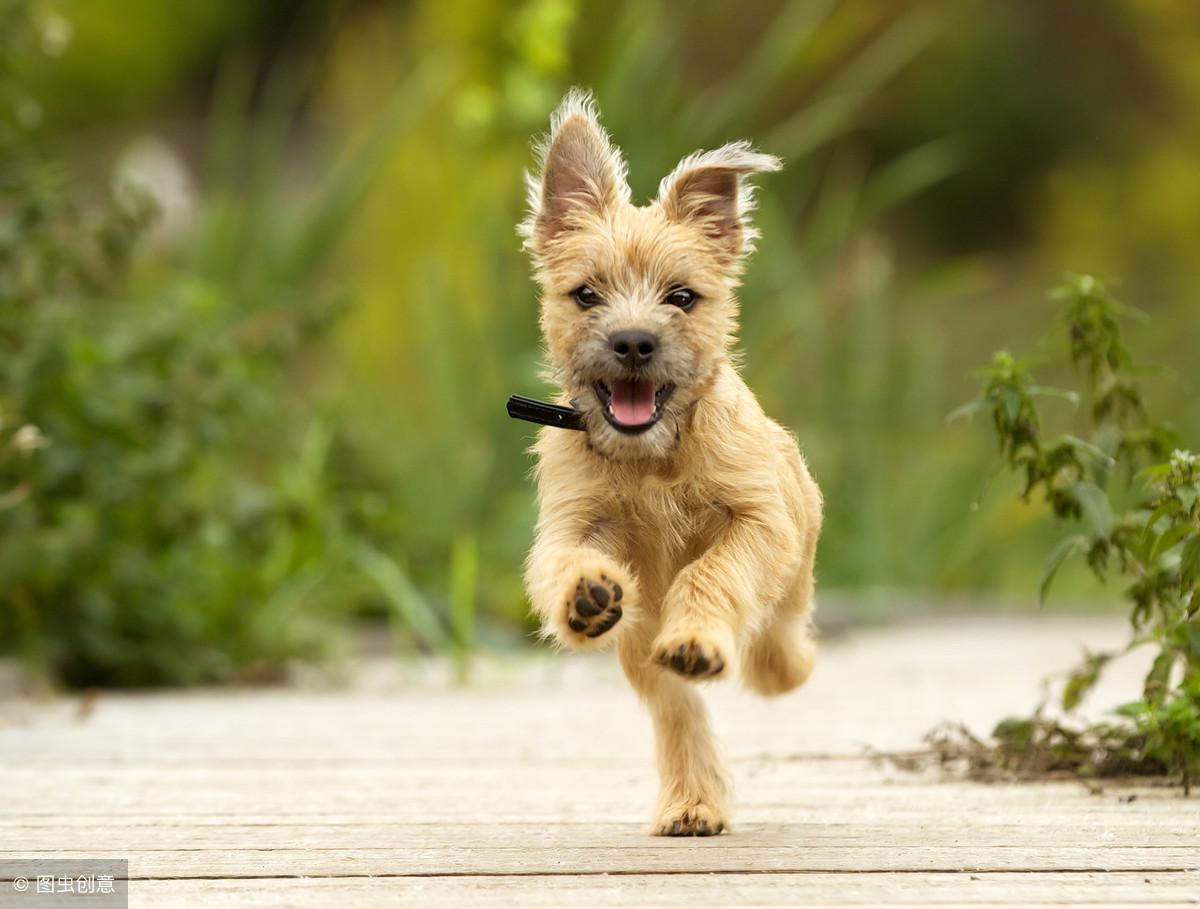 你家狗叫什麽名字,這10個讓你笑噴,真的