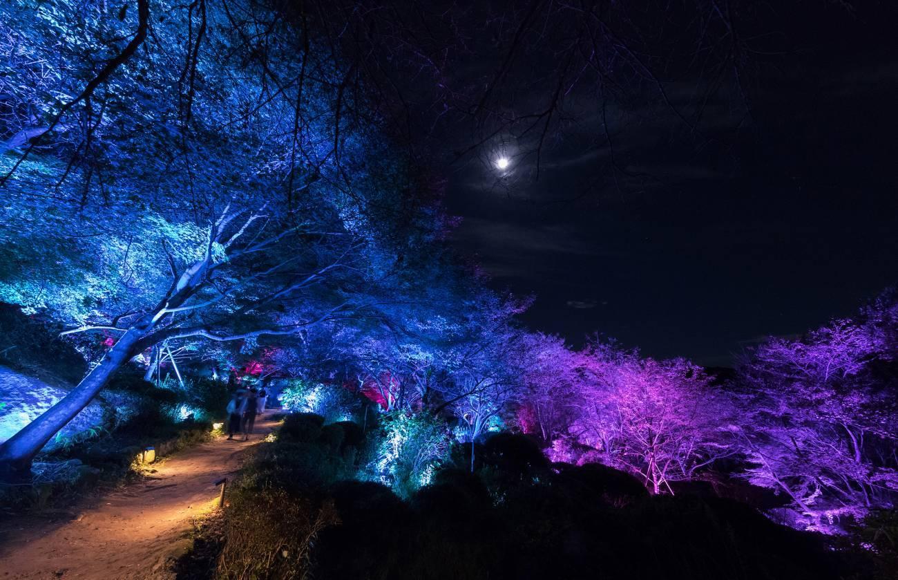 日本御船山樂苑「眾神居住的森林」,自然與科技的完美結合