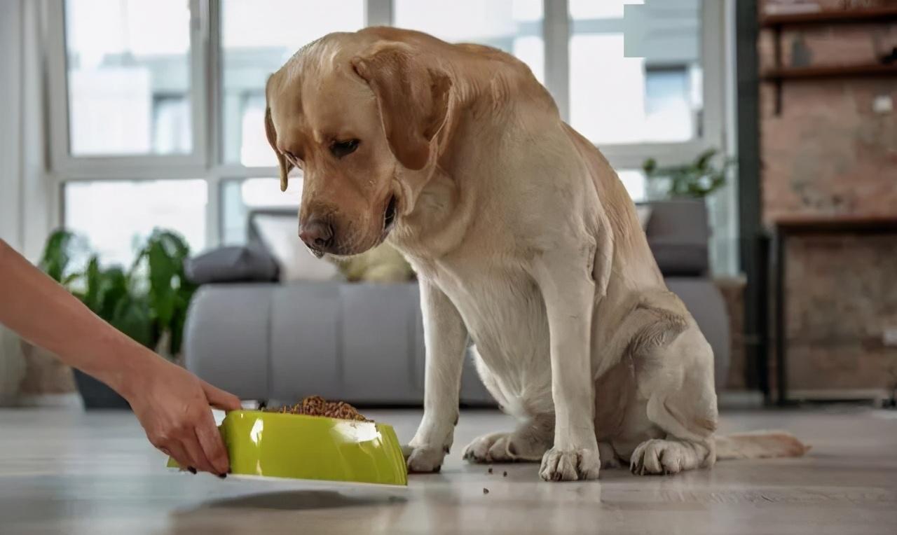 狗狗突然大量喝水,一般有这几个原因,第3个要警惕起来