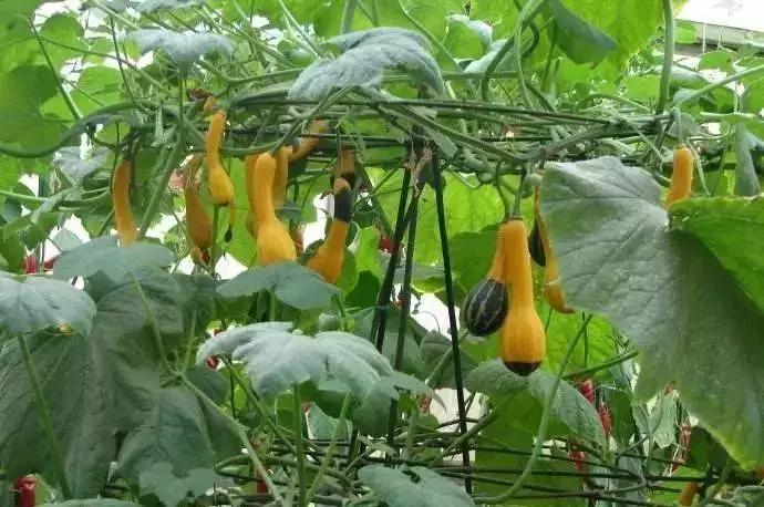 4大现代农业种植模式,13种栽培方式,你用的是哪种?