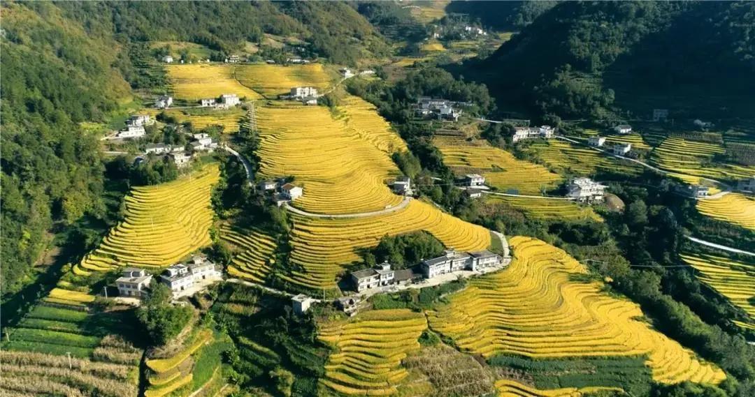 陕西这个古村落,乾隆年间种植水稻距今300年,桂花梯田美如画