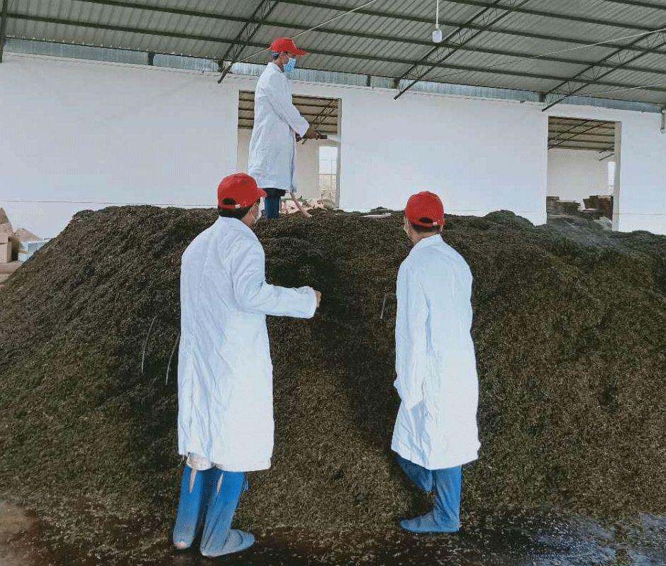 追蹤報道|普洱茶每次翻堆的背后,究竟是品質升華還是工藝需求?
