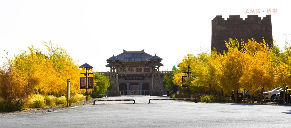 第一次听说胡杨大道:这次去阳关景区终于体验到了