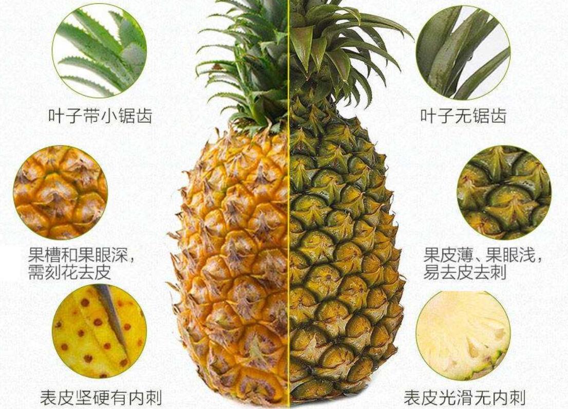 菠蘿和鳳梨傻傻分不清? 牢記這4點,看一眼就分出來,別再亂買了