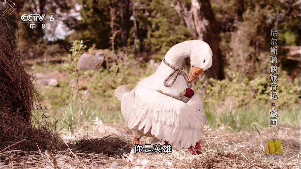 騎鵝旅行記的作者是誰(騎鵝旅行記主要內容)