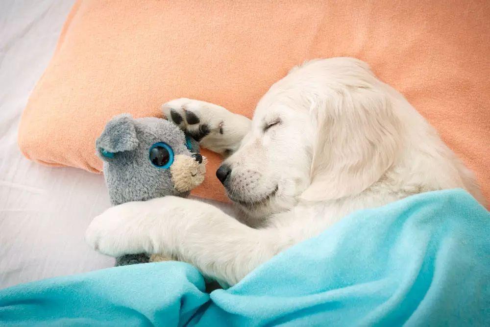 """如果狗狗睡觉有这几个""""小动作"""",恭喜你,它一定很爱你"""