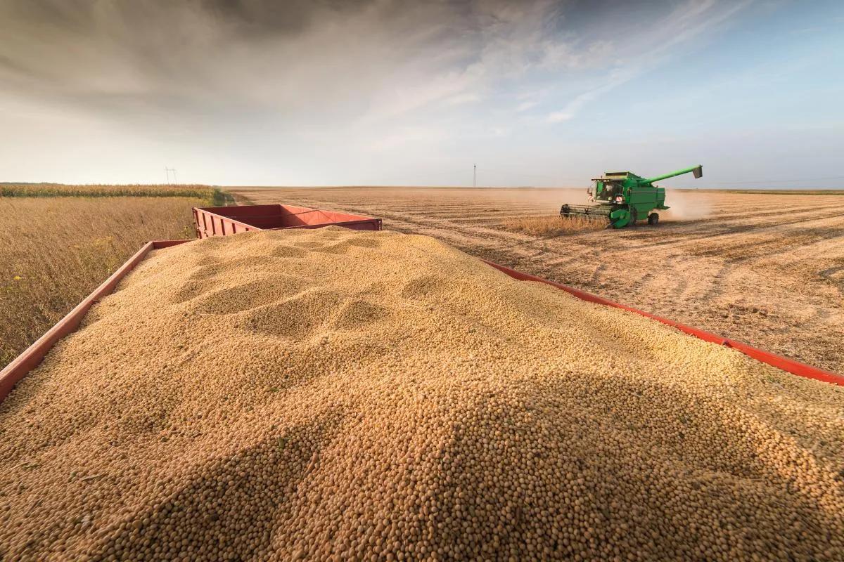 """""""不该坐地起价的"""",失去中国市场之后,美国大豆崩了"""