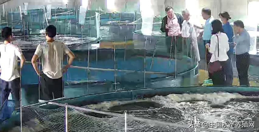 重磅!30立方水体6000元产值!南美白对虾工业化零换水养殖模式创新技术在安徽省来安县试验成功