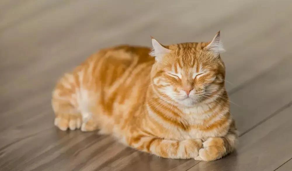 自以為很了解貓? 下面這12個關於貓咪的冷知識你都知道嗎?