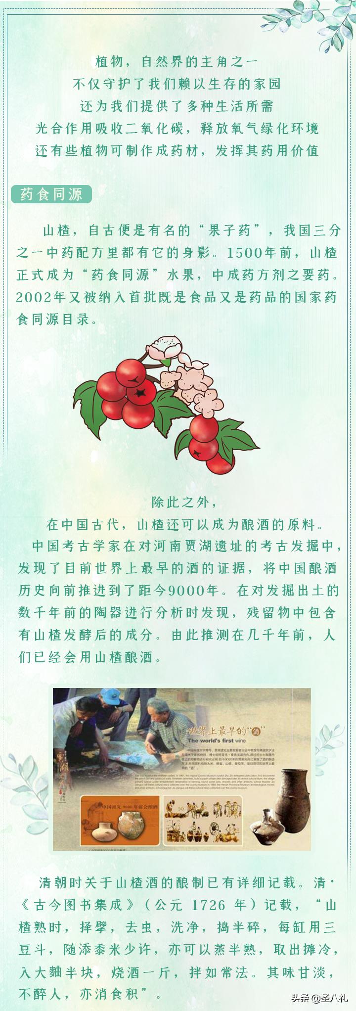 """圣八礼山楂酒――自然合奏的""""交响乐"""""""
