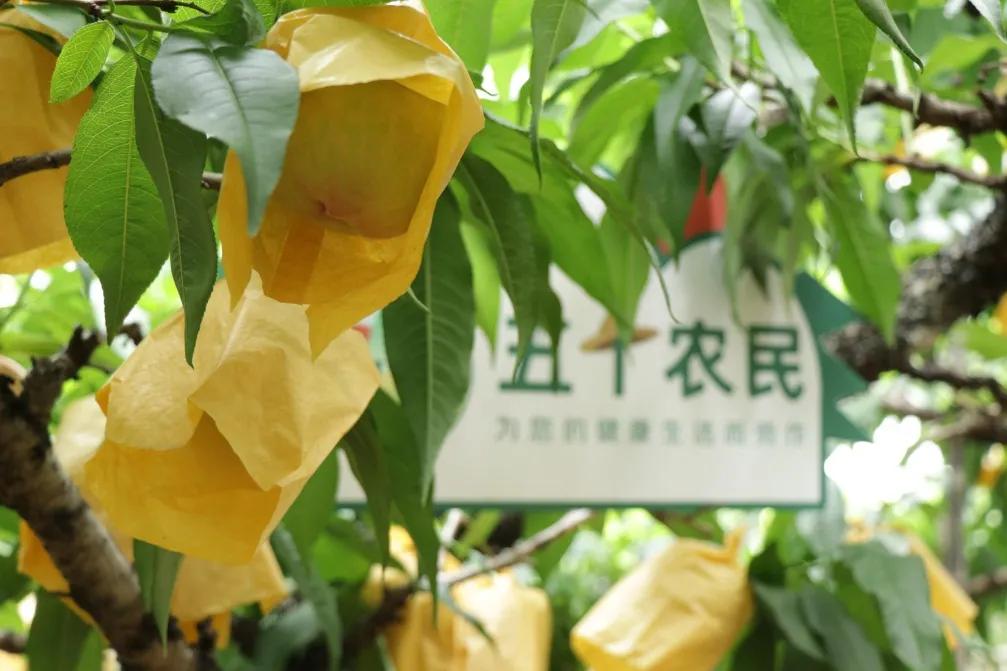 """""""共情""""探索场景化消费,618上演""""苏宁节奏"""""""