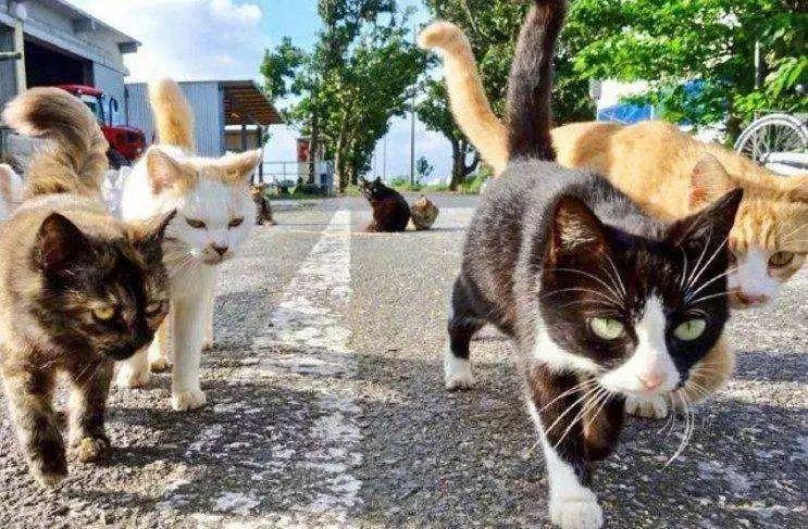 科普:為什麽貓咪在發情期間喜歡用尿液做標記?