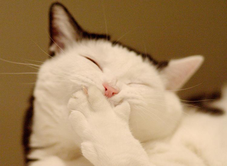 除了猫粮猫砂,还有哪些猫咪用品,可以提升养猫档次?