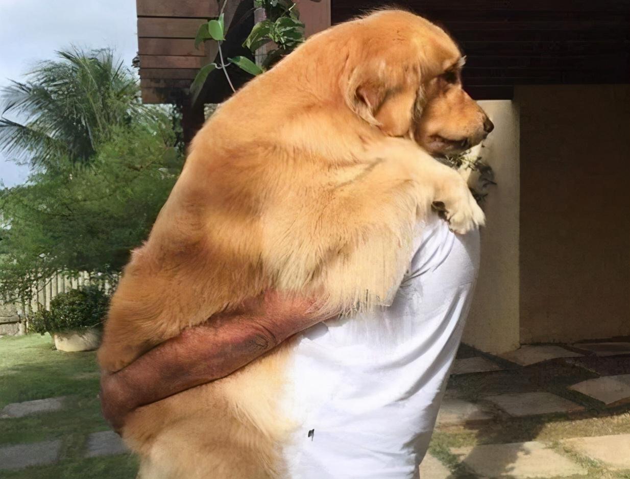 狗狗一生如时光飞逝,请珍惜爱黏着你的狗