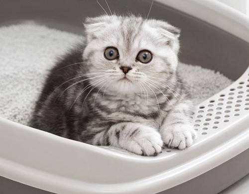 辟謠:貓最易得的是皮膚病?尿結石耳蟎鼻支等發病率更高可別大意