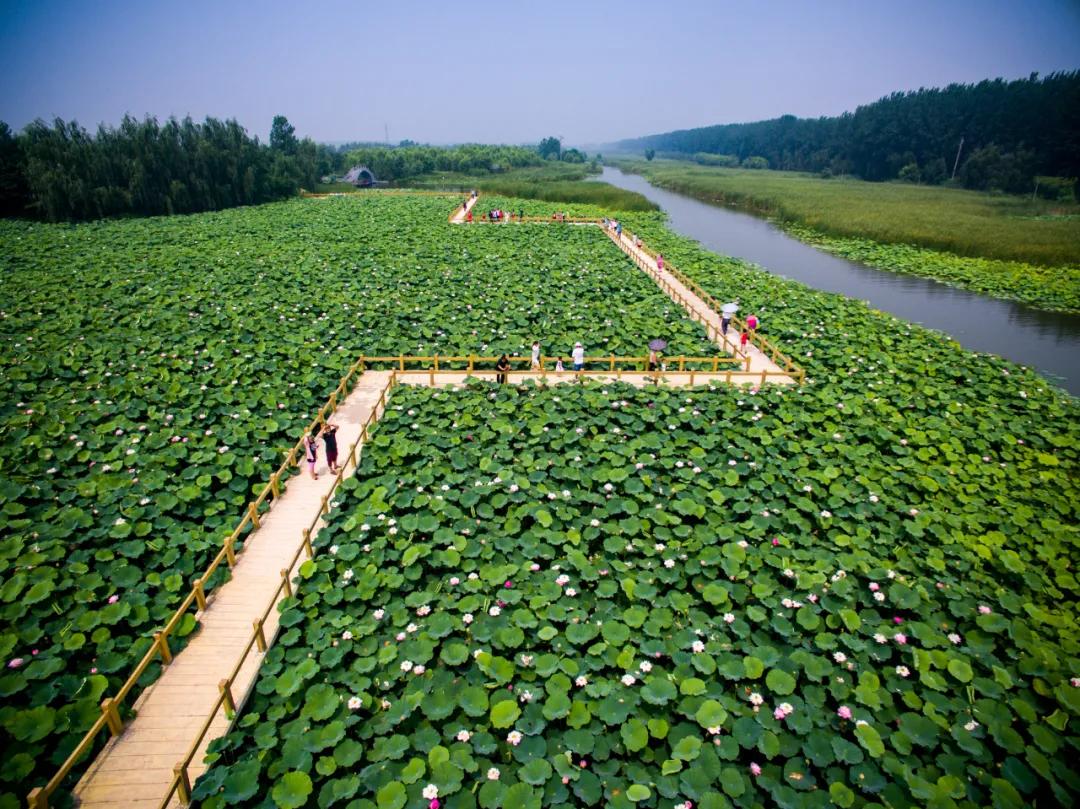 台儿庄运河湿地开园:久久不忘的色彩
